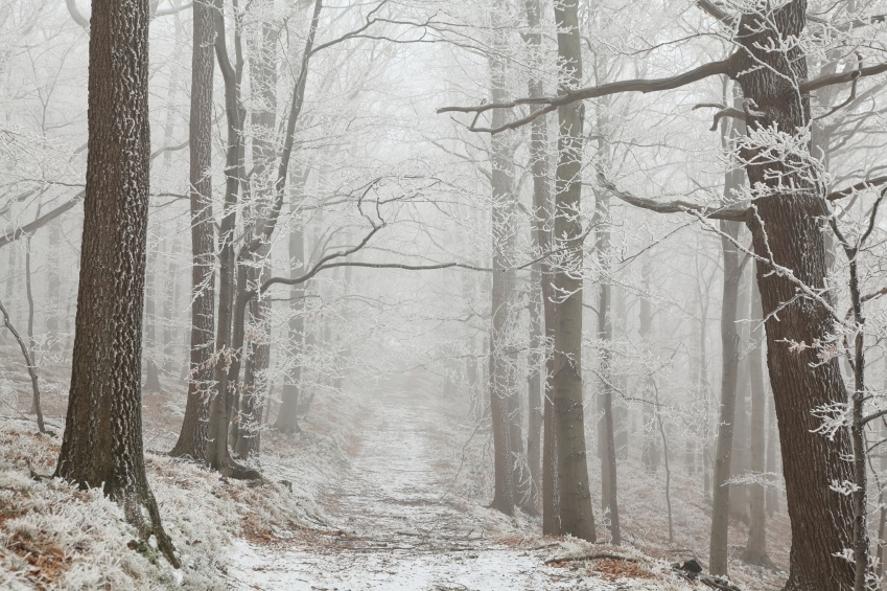 schubert-winterreise_