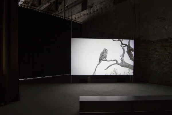 Lina Selander, Excavation of the Image: Imprint, Shadow, Spectre, Thought. Foto: Sara Sagui